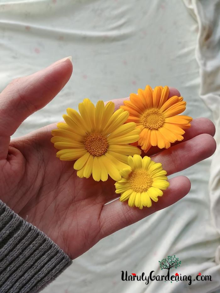 Three resina calendula flowers, held in a hand.