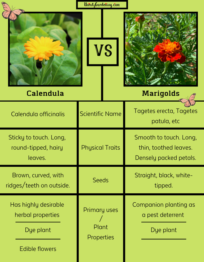 A chart that quickly compares the key points of calendula and marigolds against one another