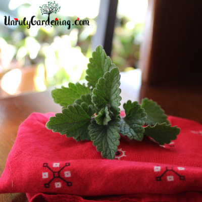 A sprig of catnip sitting atop a folded red bandanna.