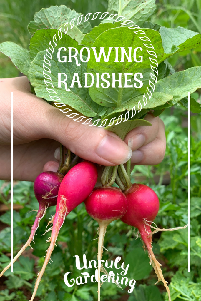 A pinterest pin of a bundle of four radishes, held in the hand.