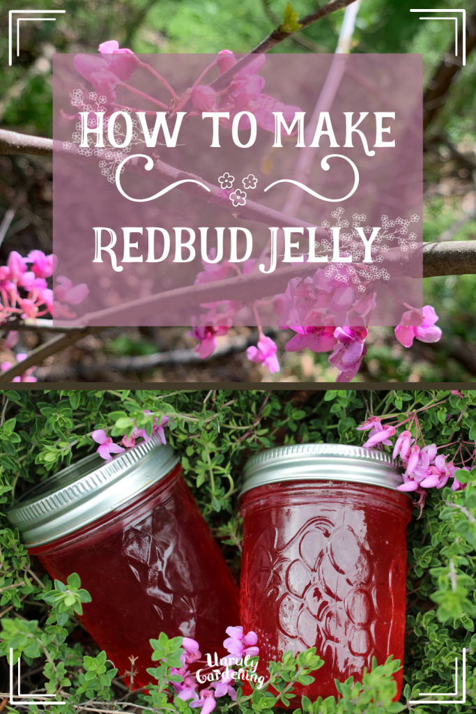 A pinterest pin of how to make redbud jelly- the top image is of a redbud tree in bloom, while the lower one is of two jelly jars, filled with pink jelly, resting in a bed of thyme. Little sprays of redbud flowers dot the thyme. A semi-transparent pink square overlays the top blooming redbud image, with the words 'how to make redbud jelly' written on it in white text.