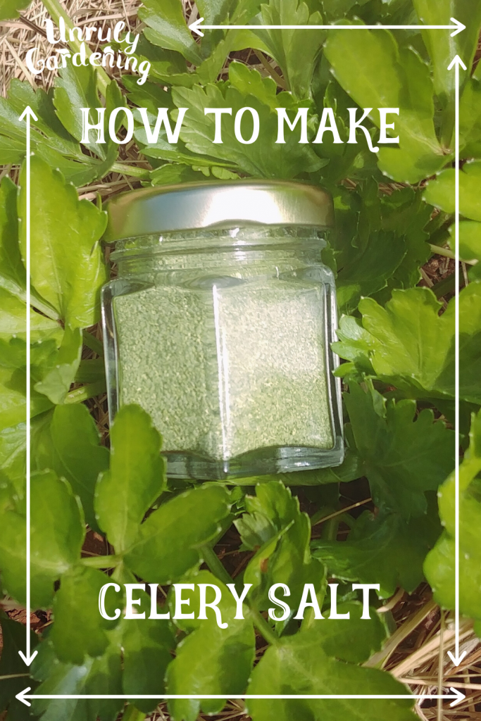 A pinterest pin of celery salt- a clear glass jar of finished celery salt in the middle of a celery plant- hay is visible in the corners.