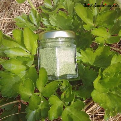 Jar of celery salt in celery plant