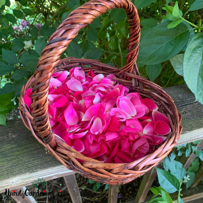 A basket of bright magenta rose petals, sitting on top of a porch railing. Green leaves fill the remaining background.