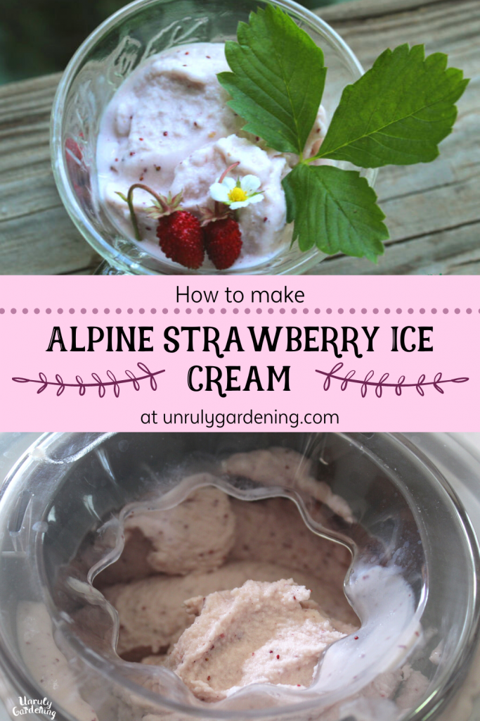 A pinterest pin for alpine strawberry ice cream. The top image is of a clear glass cup of ice cream set atop weathered wood, two alpine strawberries, an alpine strawberry flower, and an alpine strawberry leaf placed on top of the ice cream. The words 'how to make alpine strawberry ice cream at unrulygardening.com' stand in black on a pink background in the middle of the image. The bottom image is of an ice cream maker full of alpine strawberry ice cream, visibly frozen.
