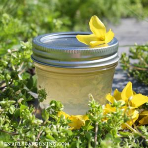 Image is of a jar of light yellow jelly in a small 4 oz glass jar with a silver lid. The jelly jar has a single yellow forsythia flower on top, off-center to the right. A loose pile of forsythia flowers is visible curling around the bottom right side of the jar. Grey stone is visible to the back, and all around the jar is a green forest of chickweed and other green garden weeds.
