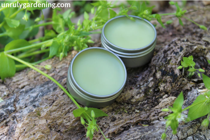 Image is of two tins of green lip balm sitting on a log. Green chickweed can be seen on the upper left and lower right of the image, with one strand straying across.