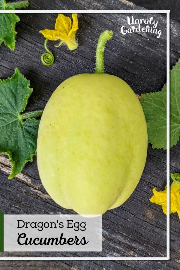 an egg shaped cucumber on wooden background