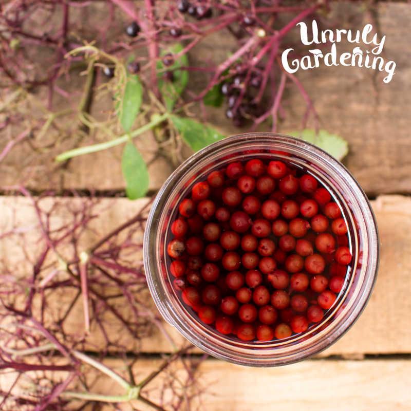 jar of elderberries covered in vinegar on wooden background