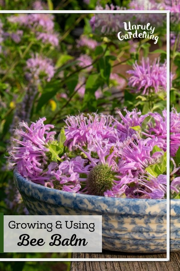 fresh bee balm flowers in a blue pottery bowl