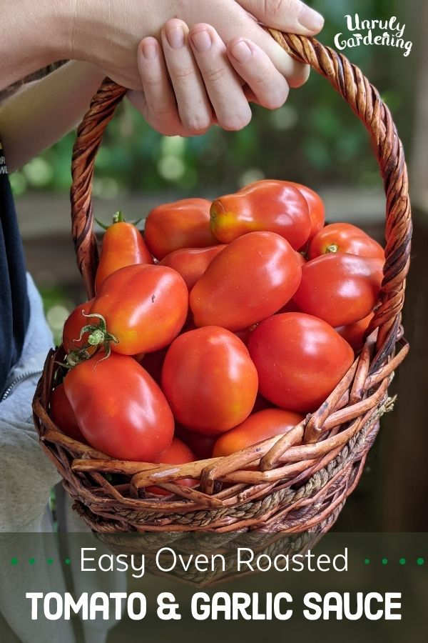 basket of fresh roma tomatoes