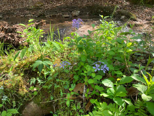 wildflowers by a creek