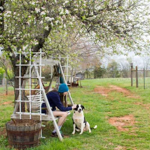 dog and friend under an apple tree