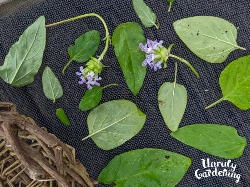 self heal flowers and leaves on a screen