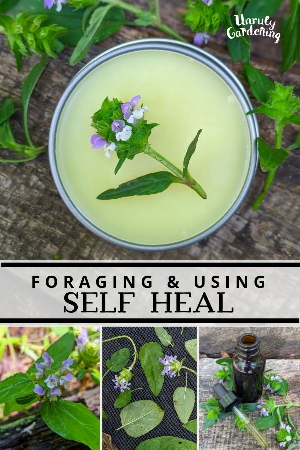 """self heal plants, salve, and tincture; text says """"Foraging and Using Self Heal"""""""