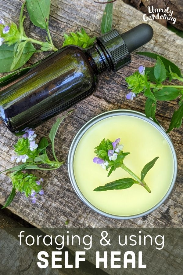 bottle of tincture beside tin of salve and fresh self heal flower heads