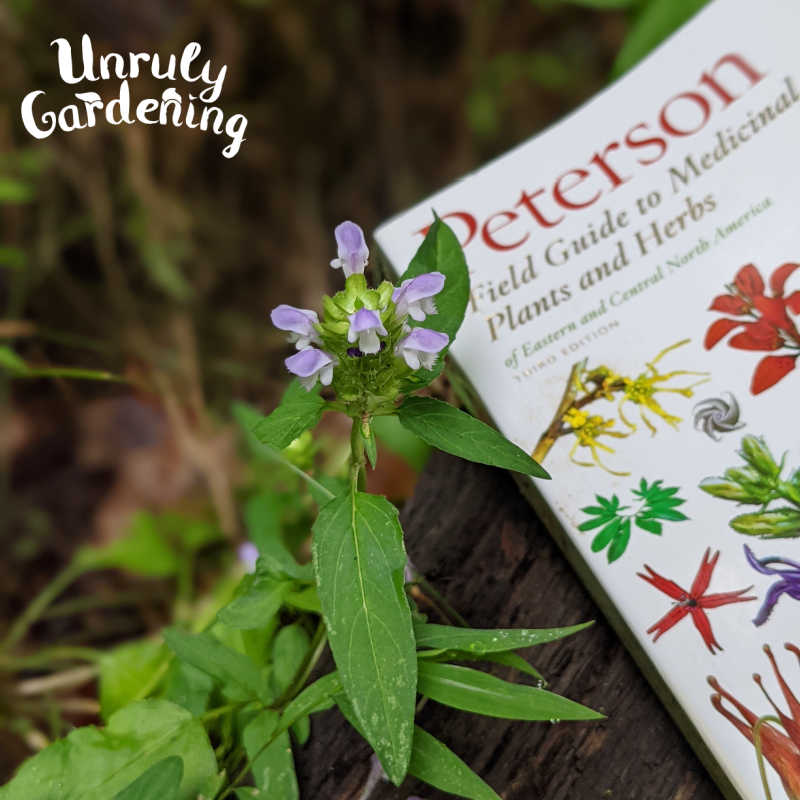 self heal plant beside a field guide to plants and herbs