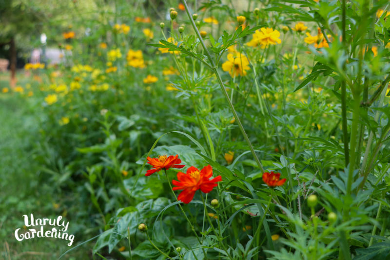 wildflower patch with red, orange, and yellow flowers