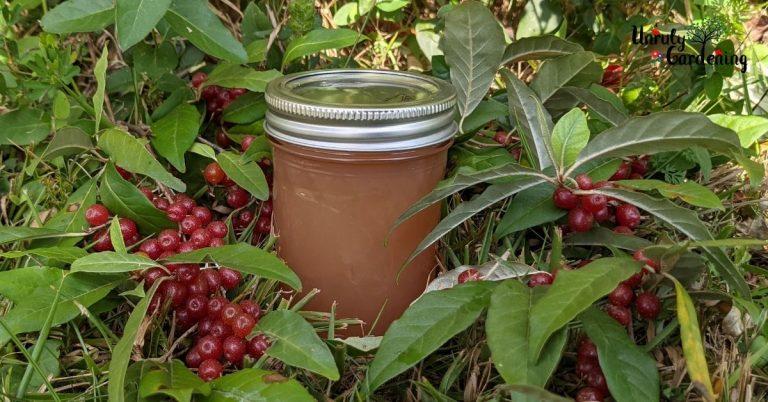 Autumn Olive Jelly