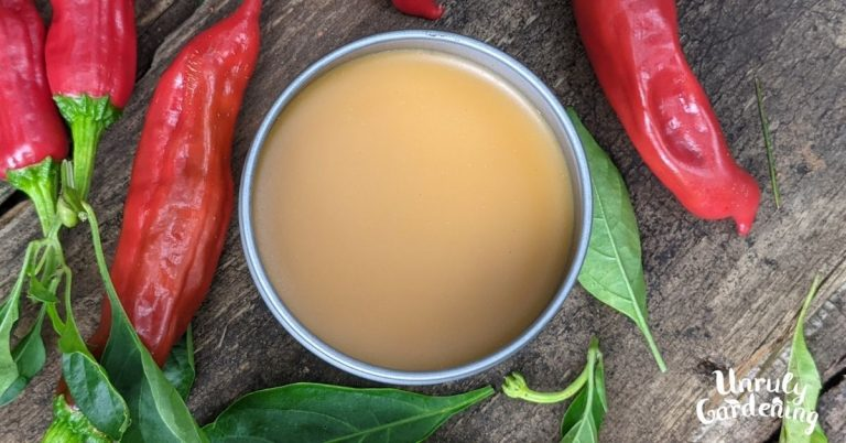 tin of salve surrounded by red peppers and leaves